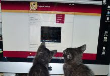 Project Camelotkittenswatching